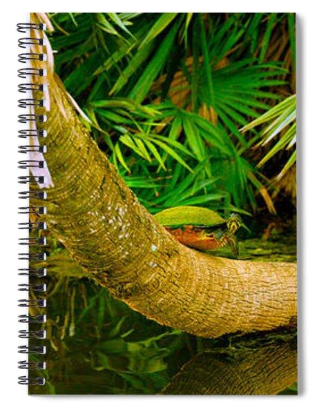 Green Turtle Chelonia Mydas In A Pond Spiral Notebook
