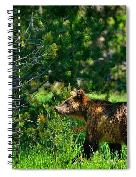 Grizzly Bear 760 Spiral Notebook