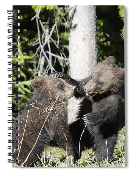Grizzly Cubs Playing Spiral Notebook