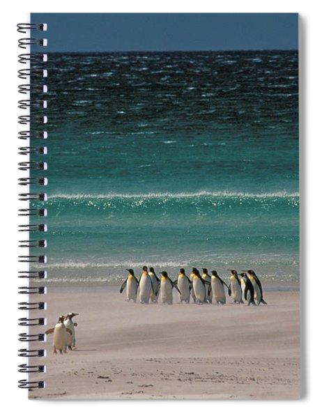 Group Of King Penguins Falkland Island Spiral Notebook