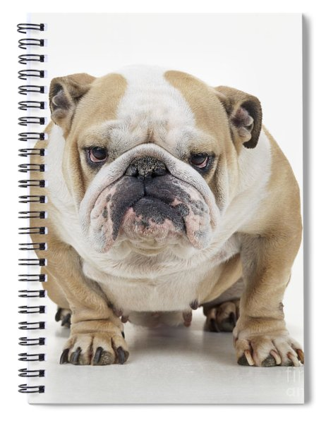 Grumpy Bulldog Spiral Notebook