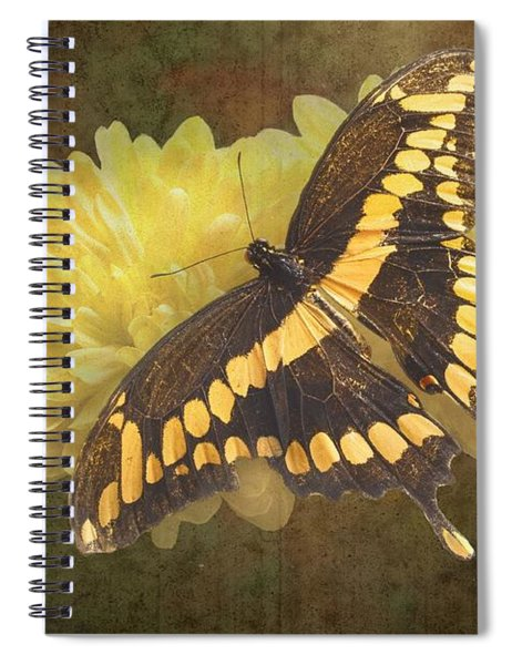 Grunge Giant Swallowtail-1 Spiral Notebook