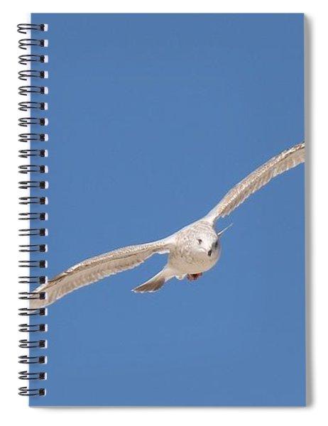 Gull In Flight - 2 Spiral Notebook