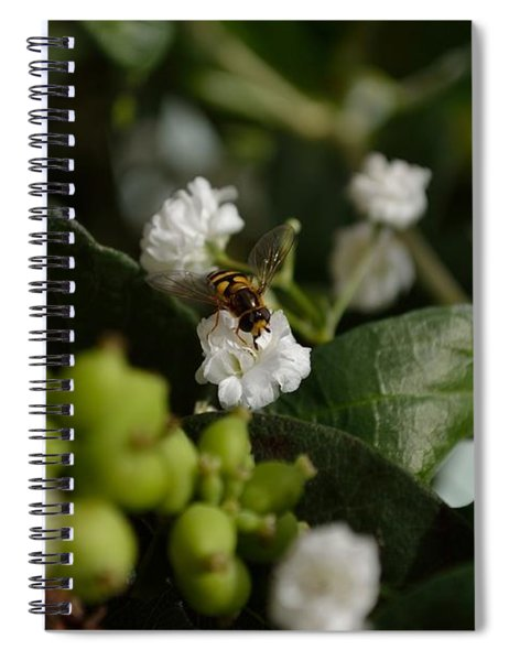 Gypsophilia Hover Fly Spiral Notebook