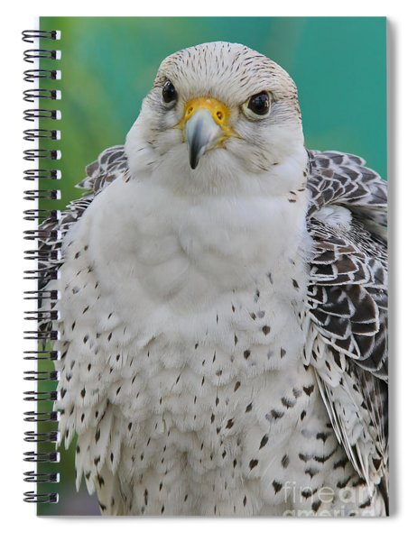 Gyrfalcon Spiral Notebook