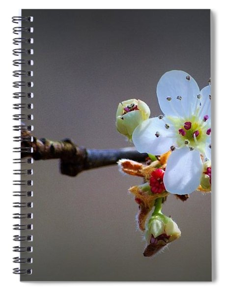Harbinger Of Spring Spiral Notebook