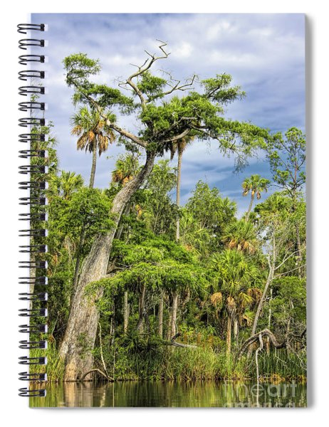 Hatrack Cypress Spiral Notebook