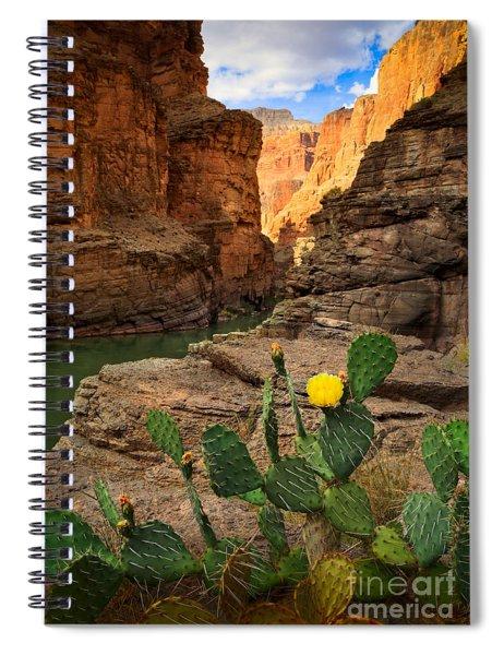 Havasu Cactus Spiral Notebook