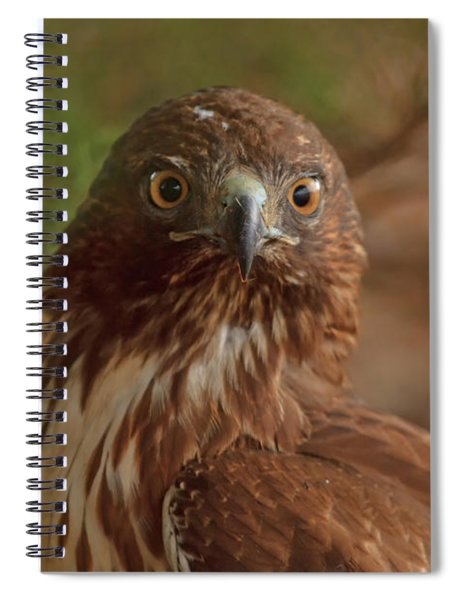 Hawk Close Encounter Spiral Notebook