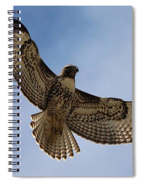 Hawk In Flight  Spiral Notebook