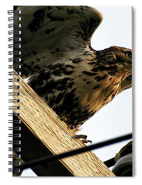 Hawk On Telephone Pole Spiral Notebook