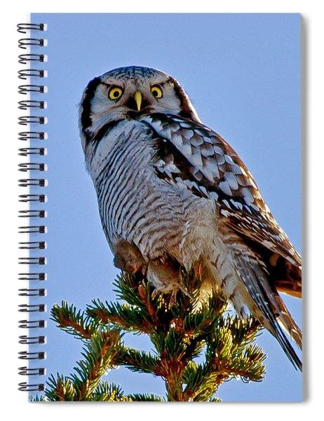 Hawk Owl Square Spiral Notebook