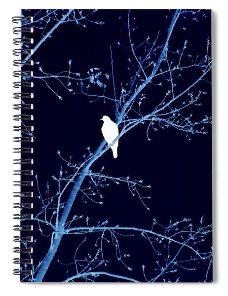 Hawk Silhouette On Blue Spiral Notebook