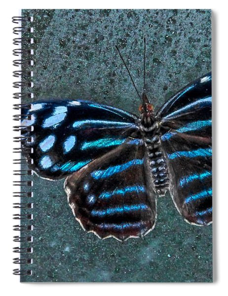 Hdr Butterfly Spiral Notebook