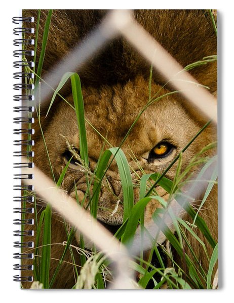 He Didn't Like Me Photographing Him Spiral Notebook by Robert L Jackson