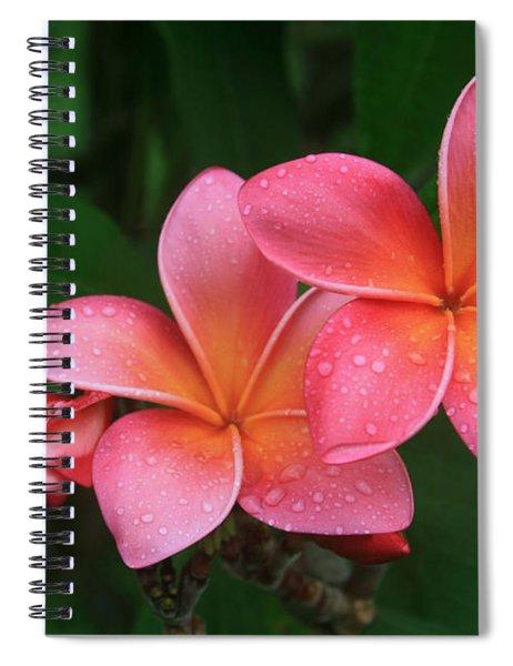 He Pua Laha Ole Hau Oli Hau Oli Oli Pua Melia Hae Maui Hawaii Tropical Plumeria Spiral Notebook