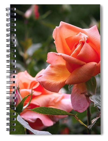 Heart Of Gold Roses Spiral Notebook