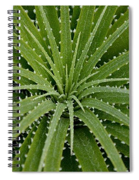 Spiral Notebook featuring the photograph Hechtia Argentea by Scott Lyons