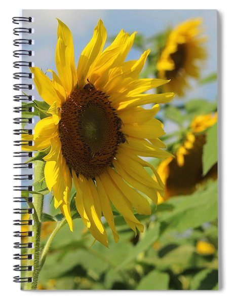 Helianthus 5 Spiral Notebook