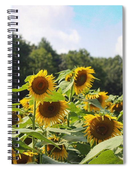 Helianthus Patch 4 Spiral Notebook