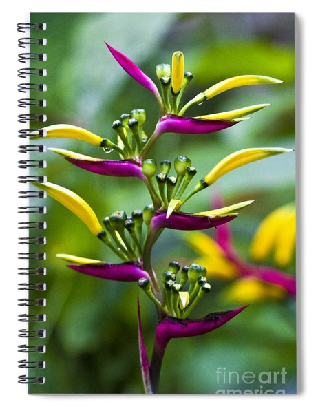 Heliconia Subulata II Spiral Notebook
