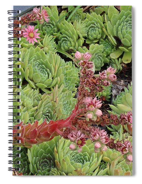 Hen And Chick In Bloom Spiral Notebook
