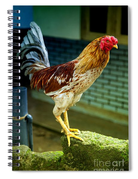 Hen On The Wall Spiral Notebook