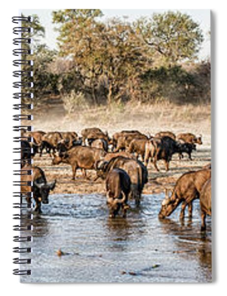 Herd Of Cape Buffalos Syncerus Caffer Spiral Notebook