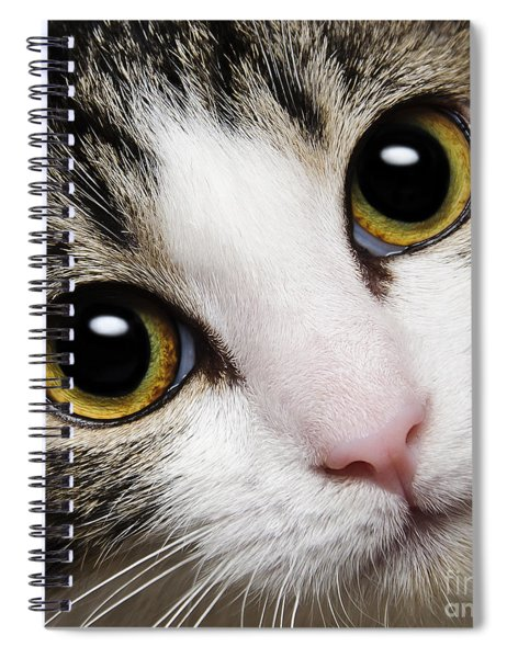 Here Kitty Kitty Close Up Spiral Notebook