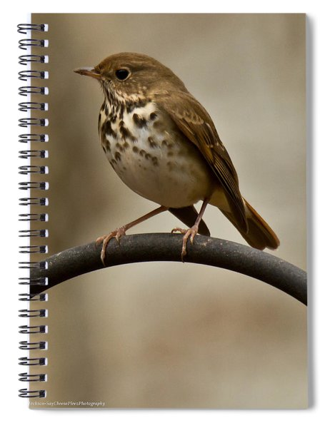 Spiral Notebook featuring the photograph Hermit Thrush by Robert L Jackson