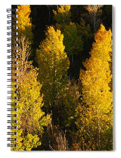 High Angle View Of Aspen Trees Spiral Notebook