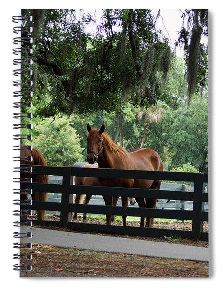 Hilton Head Island Beauty Spiral Notebook