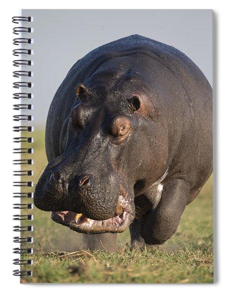 Hippopotamus Bull Charging Botswana Spiral Notebook
