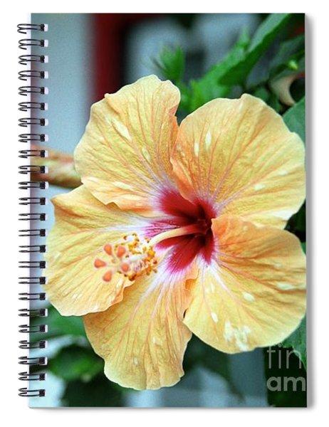 Holualoa Hibiscus Spiral Notebook
