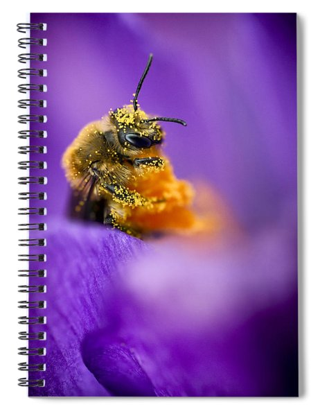 Honeybee Pollinating Crocus Flower Spiral Notebook