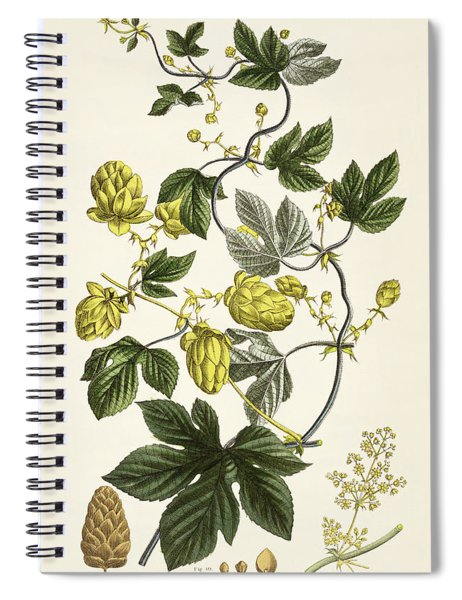 Hop Vine From The Young Landsman Spiral Notebook