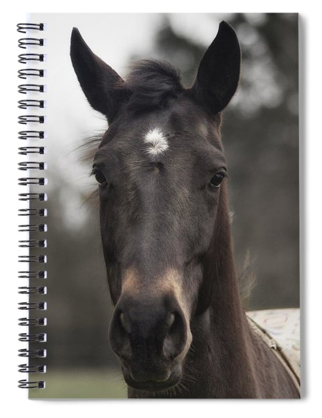 Horse With Gentle Eyes Spiral Notebook