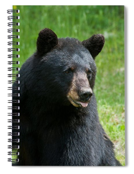 Hot Day In Bear Country Spiral Notebook