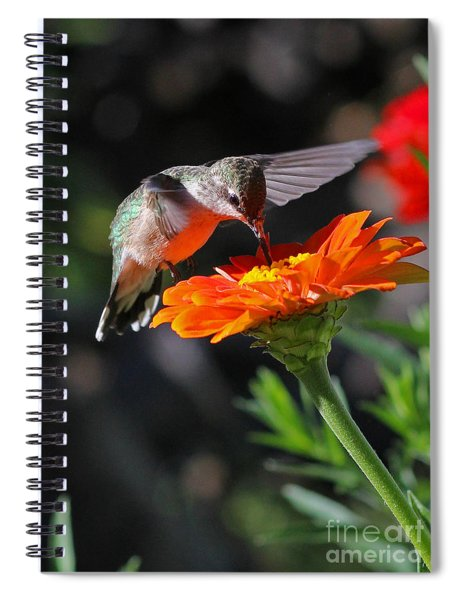 Hummingbird And Zinnia Spiral Notebook
