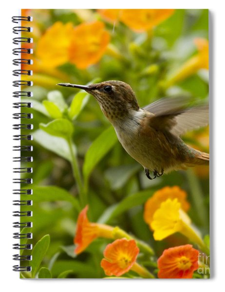 Hummingbird Looking For Food Spiral Notebook