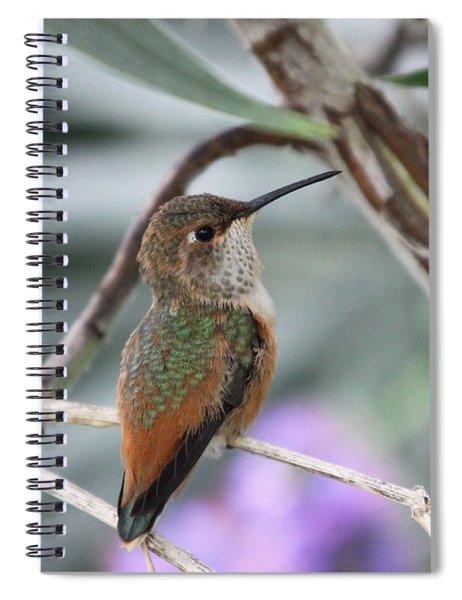 Hummingbird On A Branch Spiral Notebook