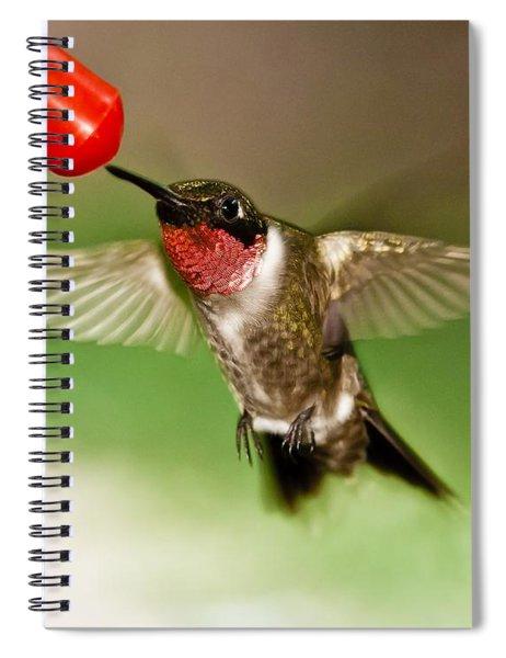 Spiral Notebook featuring the photograph Hummingbird by Robert L Jackson