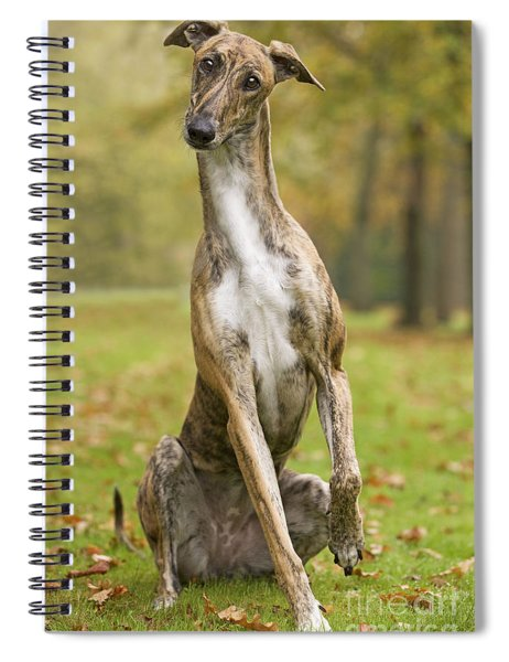 Hungarian Greyhound Spiral Notebook