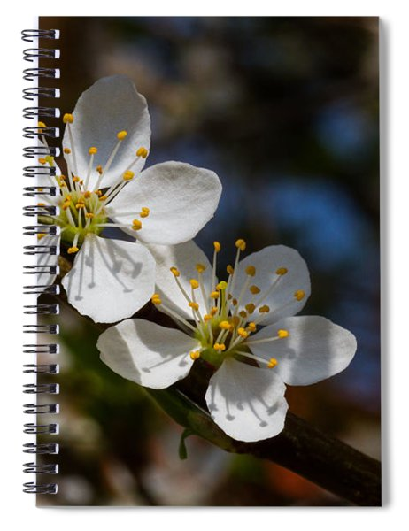 Hungry For Sun Spiral Notebook