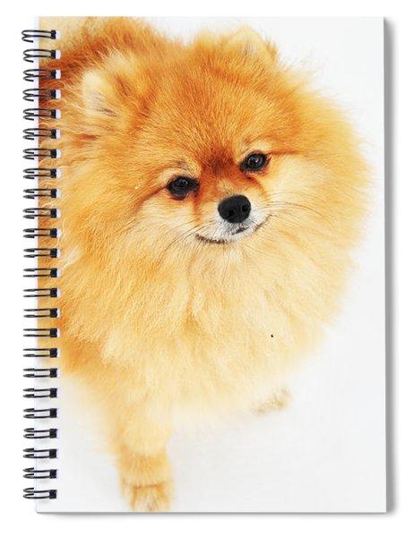 I Am Here I Spiral Notebook