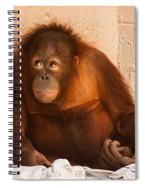 Spiral Notebook featuring the photograph I Didn't Mean To Do It by Robert L Jackson