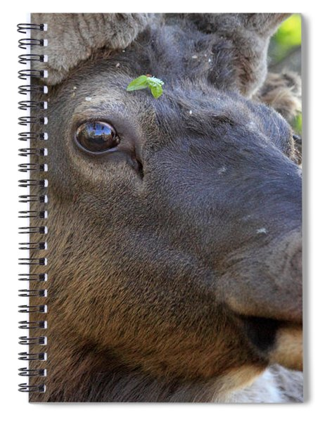 I Have What On My Face? Spiral Notebook