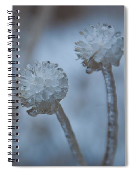 Ice-covered Winter Flowers With Blue Background Spiral Notebook