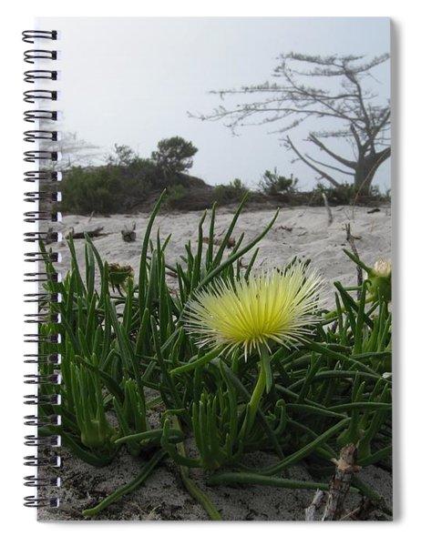 Iceplant Bloom On Carmel Dunes Spiral Notebook