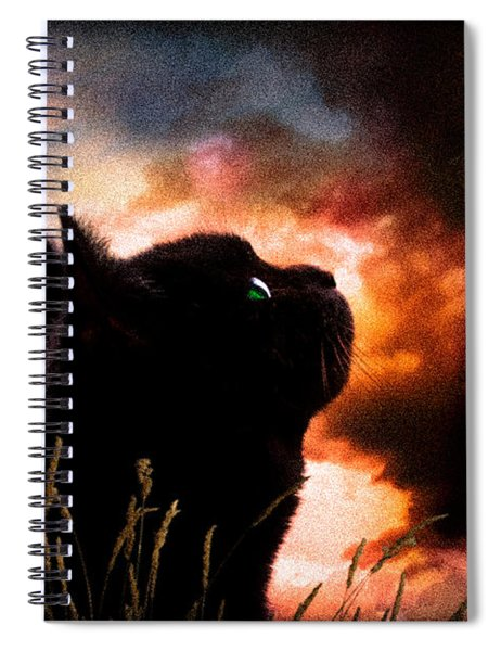 In A Cats Eye All Things Belong To Cats.  Spiral Notebook